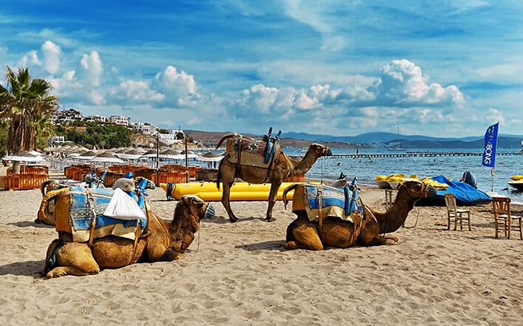 Верблюжий (Camel Beach)