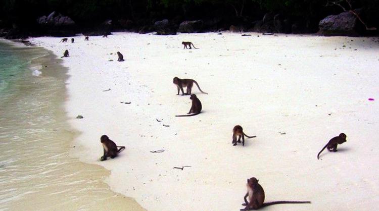 Пляж обезьян (Monkey Beach)